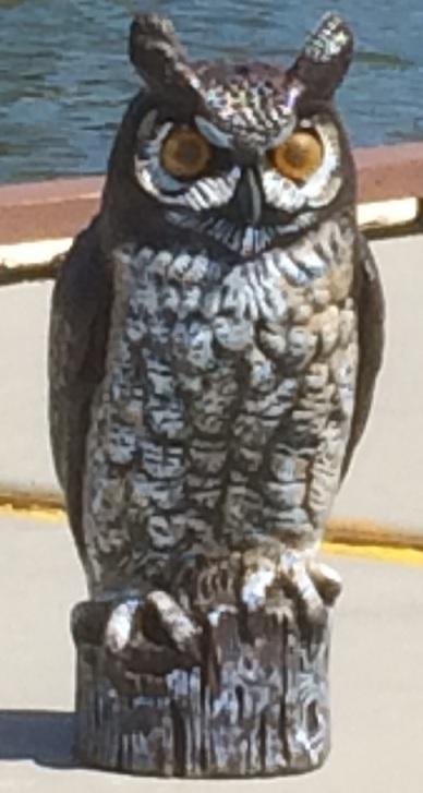 Illume Owl
